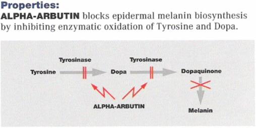 alpha-arbutin-630